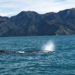 Foto de Whale Watch Kaikoura