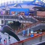 國立海洋生物博物館照片