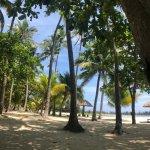 Billede af Dongjiao Coconut Forest