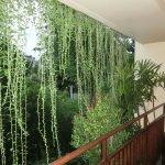 绿帘装点阳台