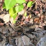Leaf照片