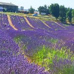 Photo of Discover Provence