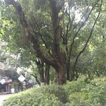 Foto de Rongshanhu Tourism Resort