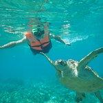 与大海龟共舞