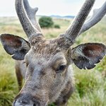 Horton Plains National Park의 사진