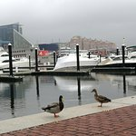 Photo of Inner Harbor