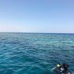 صورة فوتوغرافية لـ Crazy Dolphin Diving Center