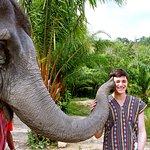 Perfect place , happy elephant