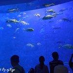 ภาพถ่ายของ Polar Ocean World