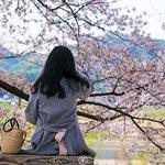 Yodo River Park Sewaritei District Photo