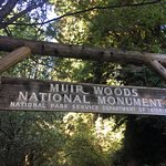 Photo of Muir Woods National Monument
