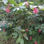 Фотография Southern China Botanical Garden