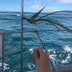 PJ's Sailing Adventures의 사진