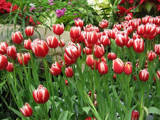 Shanghai Botanical Garden: 花