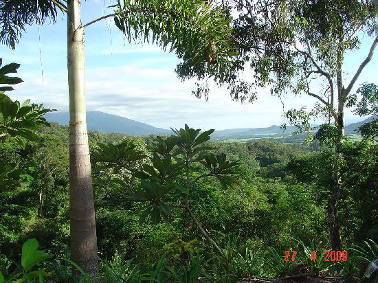 Mai Tai Resort: 无限的绿