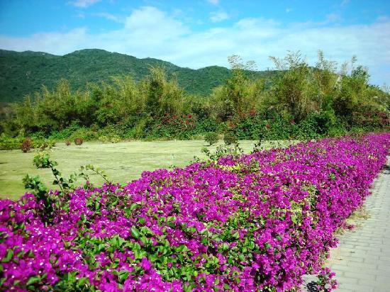เอเจียน คอนนิเฟอร์สวีท รีสอร์ท: 春节时,这里有青山、绿树和鲜花