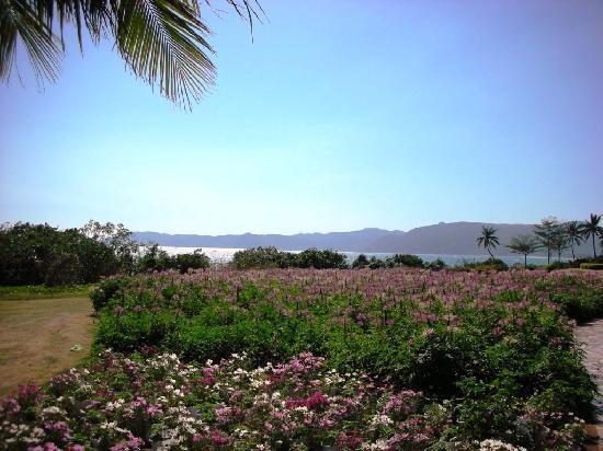 เอเจียน คอนนิเฟอร์สวีท รีสอร์ท: 海边有人工种植的各种花坛