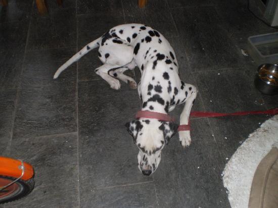 Fanhua Sijing Hotel: 老板的斑点狗