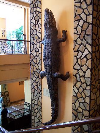 Chimelong Hotel: 标本