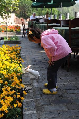 Li River Resort: 花园里的小兔子是女儿的好朋友