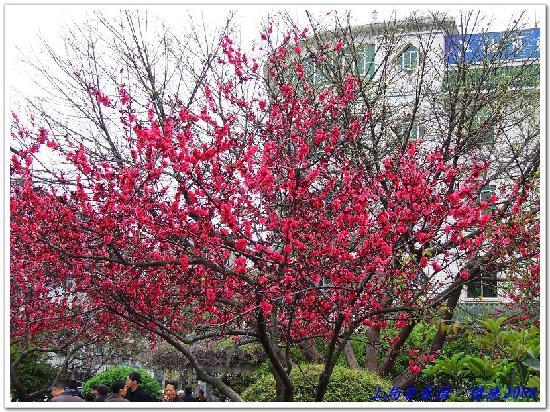 Jiangyou, China: 太白公园04