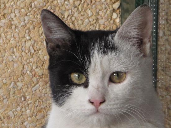 Hotel Eliana Park: 酒店门口的一只漂亮猫
