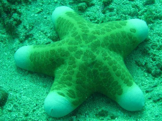 Philippines: Sea animals