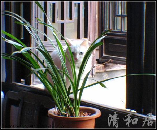 窗台前的猫咪