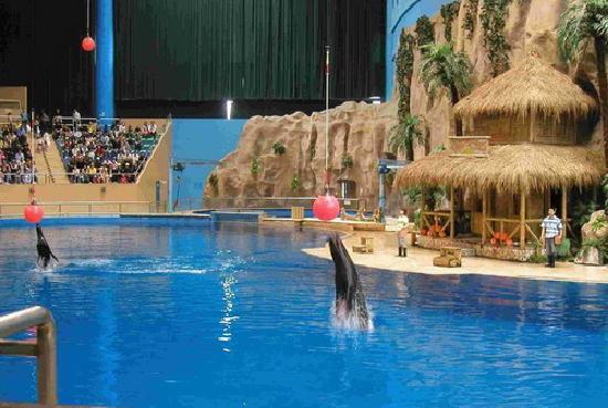 Beijing Aquarium (Beijing Haiyangguan): 表演