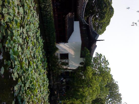 Lion Forest Garden: 夏