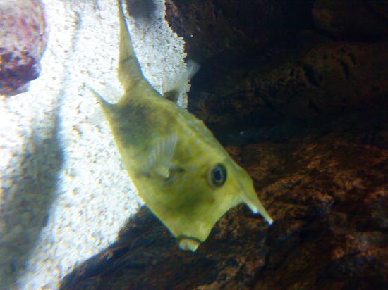 Beijing Aquarium (Beijing Haiyangguan): 很少见的牛头鱼
