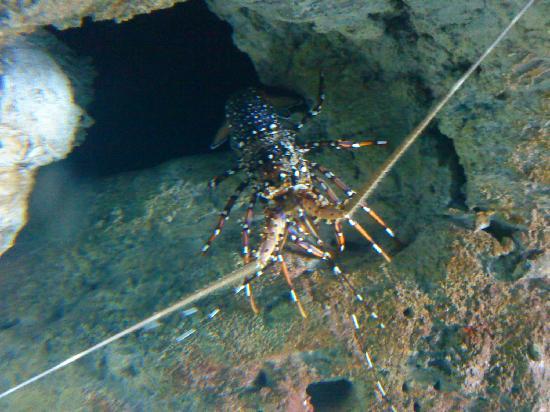 Beijing Aquarium (Beijing Haiyangguan): 小龙虾