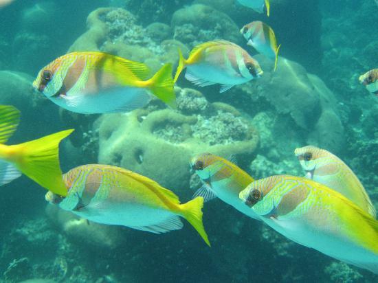 Mango Bay Grand Resort: 浮潜就能看到的哦