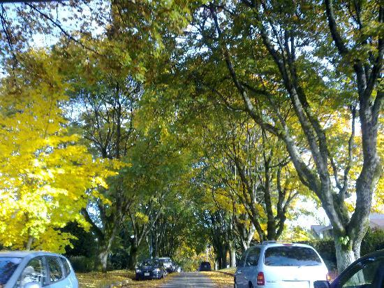 Vancouver, Canada: 去年万圣节前夕在回家的路上拍得,天气很好吧~树也很多~