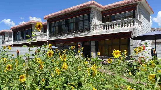 Zai Lu Shang Inn: 院子盛夏开满了向日葵