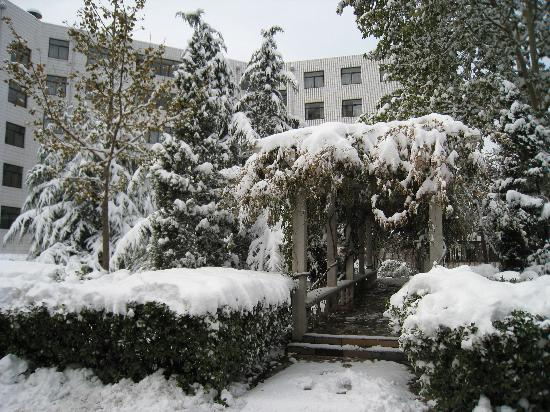 Zi Ying Ge Hotel Beijing : 院内花园,后为单人间楼