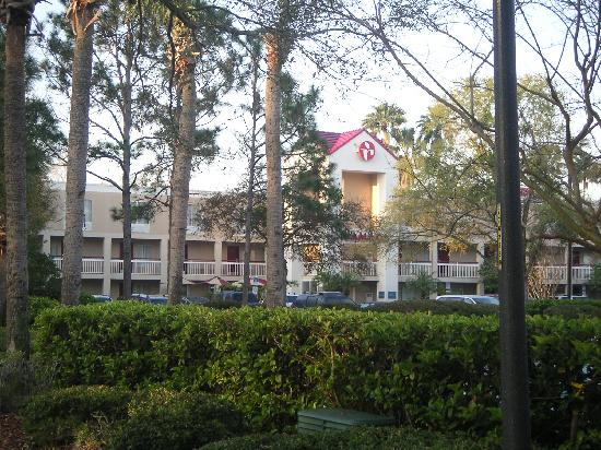 Ramada Orlando Near Convention Center: 在旁边酒店等disneyland班车的清晨,旁边Ramada在椰林中的朦胧景象