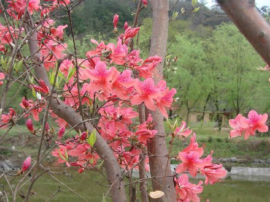 Tiantangzhai Tiantai Holiday Village: 春天的天泰度假村1
