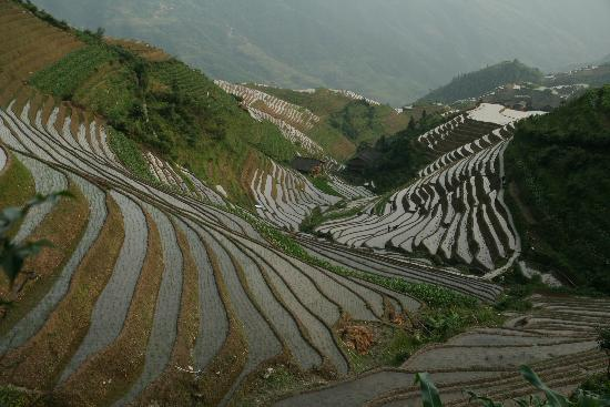 Foto di Dragon's Backbone Rice Terraces, Longsheng County
