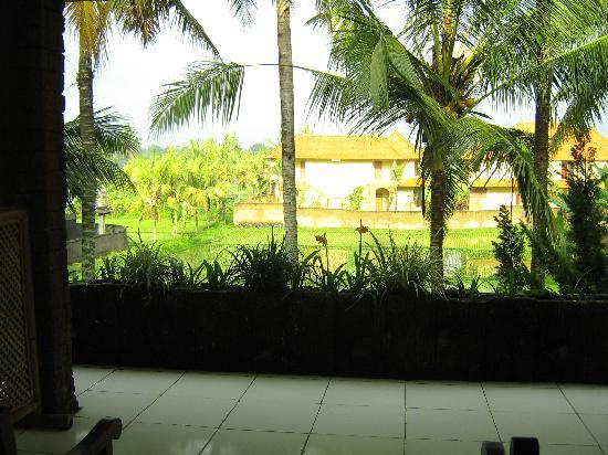 Panorama Hotel : 阳台和田园景观