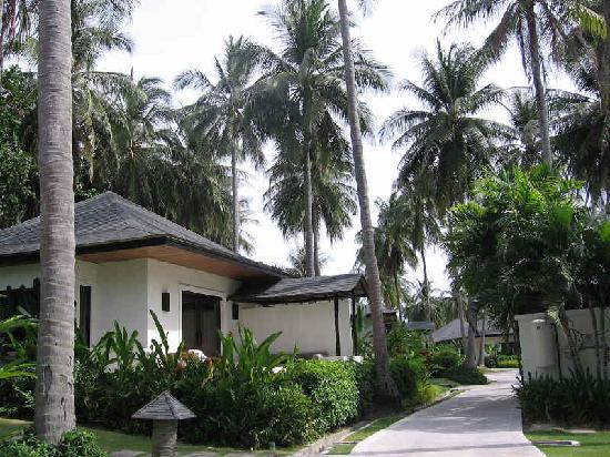 โรงแรม เดอะ ราชา: resort的每件房子都这样子的,错落在棕榈树林里