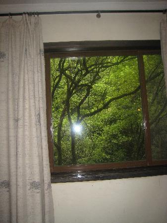Tangrenjie Hotel: 窗外