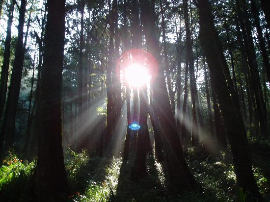 Ali Mountain (Alishan) : 斑驳树影