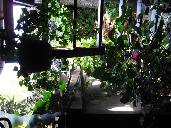 Xuyuangudong Hostel: 小庭院