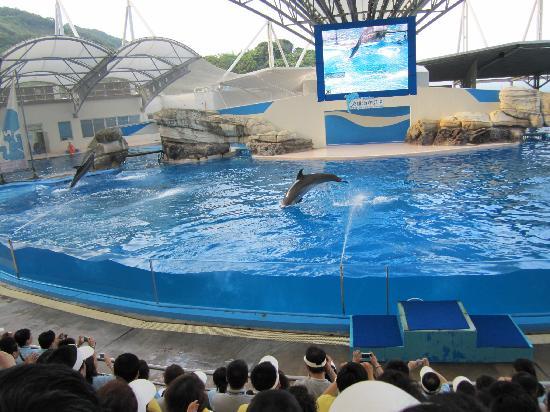 Farglory Ocean Park Hualien Taiwan Top Tips Before You