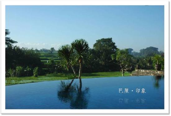 Bumi Ubud Resort: bumi的泳池稻田风景