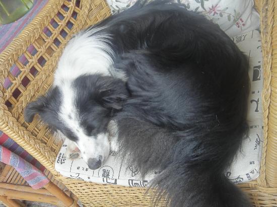 Wamao Inn: 贪睡的瓦猫