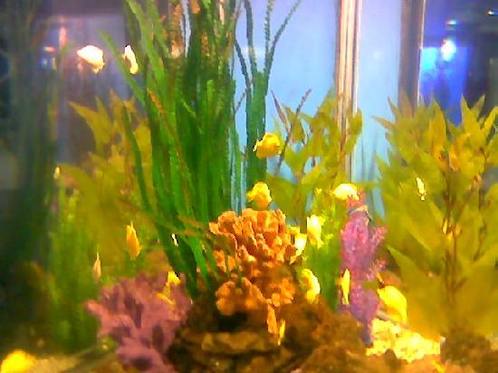 Laohutan Scenic Park: 如此美丽的海底植物