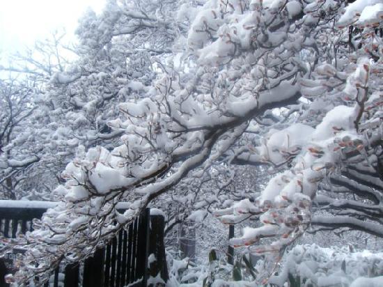 Hakone-machi, Japan: 树枝和新芽被冰包裹着,在阳光的照射下很透亮