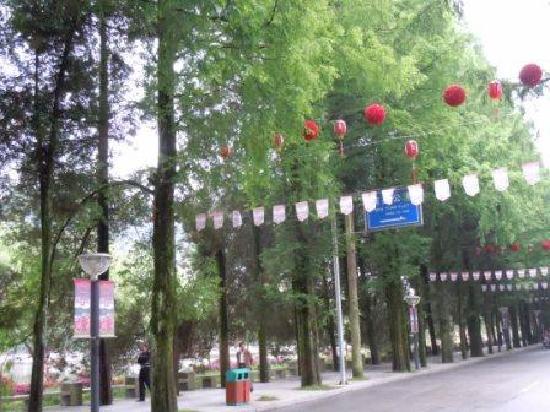 Jinggangshan Jingyuan Hotel : 宾馆门前的水杉